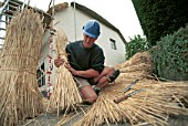 Preparing straw bundles for thatching a roof. Somerset, United Kingdom.