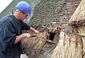 Thatching the roof of a Somerset cottage. United Kingdom.