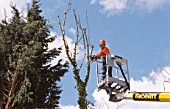 Pruning tree branches using chainsaw.