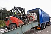 Forklift truck loading compacted recycling on to truck