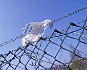 Plastic bag caught on barbed wire and chain link fence.