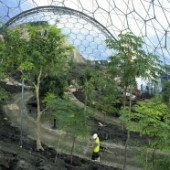 Landscaping works inside biome at the Eden Project, Cornwall, United Kingdom. Designed by Nicholas Grimshaw and Partners.