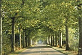 Tree-lined avenue in the Region of Savoy, Province of Rhone Alps, France