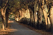 Tree-lined avenue during the late afternoon - France