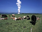Cow farming and the cooling tower of nuclear power plant Leibstadt, Switzerland