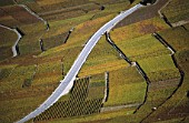 Vineyards - region of Lavaux - Canton of Vaud - Switzerland