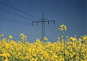 Pylon and power transmission lines over a field of rape