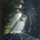 Forest road at morning - region of Eifel - county of Rhineland palatinate - Germany
