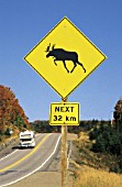 Motorhome at highway - signboard warning of moose - lake Superior province park - province of Ontario - Canada