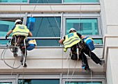 Window cleaners on ropes and suction grips outside an office window