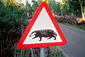 Badger Crossing, Road Sign, Transport, Wales