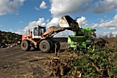 Front loader emptying garden waste into composting plant at site for recycling food and garden waste, Suffolk, UK