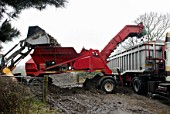 Sugar beet being cleaned before being loaded on to lorry, Suffolk, UK