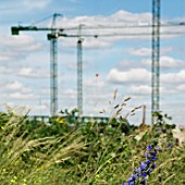 Wild flowers near the construction of the Olympic Stadium  Stratford  East London  UK