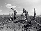 Students help build Amur greenhouse facility, Amursk, Khabarovskyi, Russia, July 1979