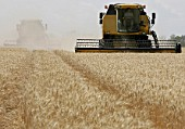 Harvesting grain crops in the Rostov Regions Azov District, Russia