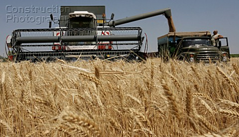 Harvesting grain crops in the Rostov Regions Azov District Russia