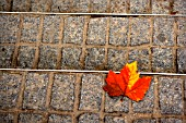 Beautiful detail of street with autumn leaf