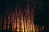 Mediterranean forest at night on fire