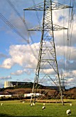 Wylfa Power Station with pylons and sheep, Isle of Anglesey, North West Wales.