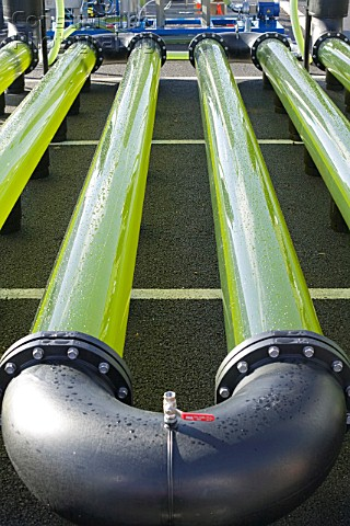 An AlgaeLink Algae growing system that is harvested to make ethanol and biodiesel Producing oil from