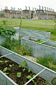 A community vegetable garden at Bedzed the UKs largest eco village Beddington London UK