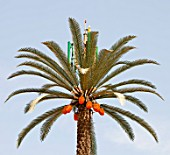 A mobile phone mast made to look like a palm tree in Dubai