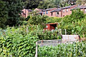 Allotments for growing fruit, vegetables and flowers in Durham, UK. Allotments allow local people to grow their own vegetables and cut down hugely on food miles.