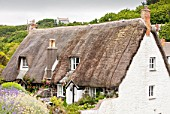 Thatched cottages in Cadgwith, a pretty Cornish fishing village on the Lizard, UK.