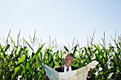 Businessman with map in cornfield.