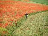 Female Ecologist In Poppy Field
