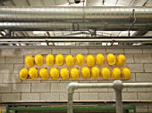 Rows Of Yellow Hard Hats