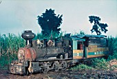 Ma Ao Sugar Central on the Philippine island of Negros. An afternoon journey along the cutcut line with locomotive number 8am 0-6-2 rebuilt from an 0-6-2 saddle tank of 1920, Wednesday 9th December 1981.