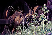 Driving wheels amid the rampant vegetation of the steam locomotive graveyard at Thessaloniki Greece.