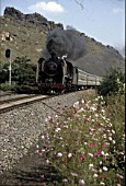 Pacific Power as a China Railways SL6 4-6-2 races southwards past Saddle Montain Anshan with a Shenyang - Dalian passenger train. The planting of flowers along the tracksides is a delightful aspect of summer in China.