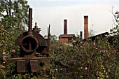 Ledo Brickworks in Assam following closure with a 20 gauge Bagnall 0-4-0ST abandoned against the servicing /watering point on Sunday 25th March 2007.
